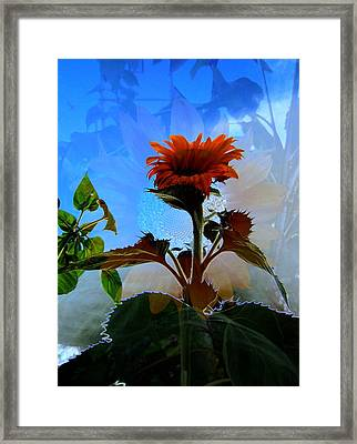 Flower Patch 2 Framed Print by Andrea Lawrence