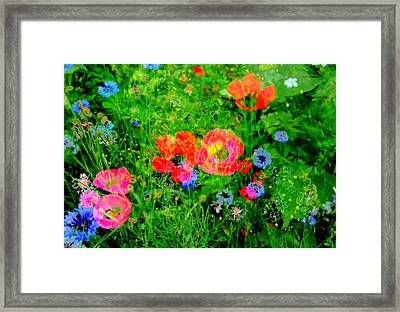 Flower Patch 3 Framed Print by Andrea Lawrence