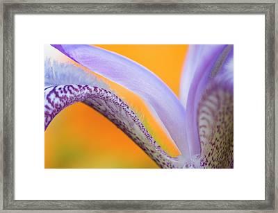 Flower Pattern Credit Framed Print