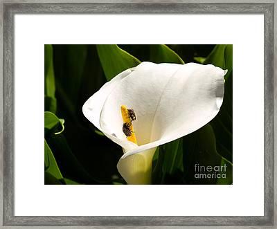 Flower Pests Framed Print by Sinisa Botas