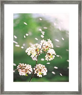 Flower Petals Floating In Air Framed Print