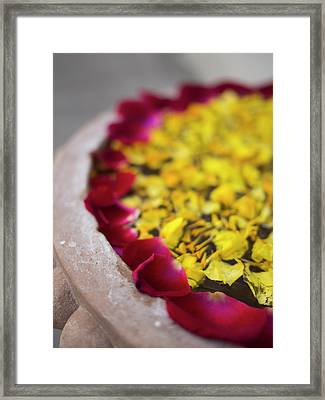 Flower Petals Floating On Water Surface Framed Print by David H. Wells