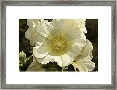 Flower Petals Of A White Flower Framed Print
