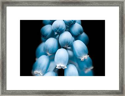 Flower Pods Framed Print by Shane Holsclaw