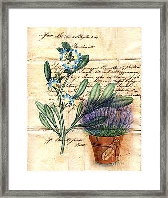 Flower Pot And Vintage Plant On Paper Framed Print