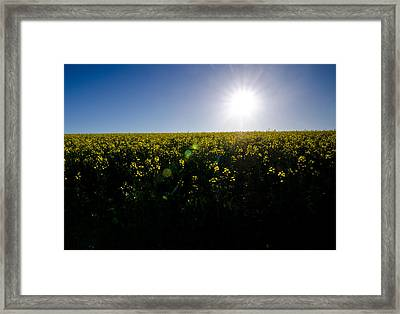 Flower Power Framed Print by Aaron Bedell