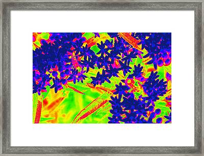 Framed Print featuring the photograph Flower Power by Cathy Shiflett