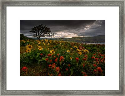 Flower Power Framed Print by Dan Mihai