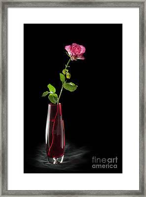 Flower Power Framed Print by Donald Davis