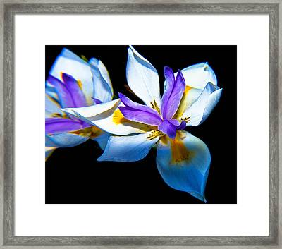 Framed Print featuring the photograph Flower Power by Joseph Hollingsworth