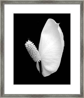 Flower Power Peace Lily Framed Print