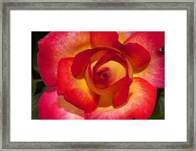 Flower Power Framed Print by Phyllis Denton