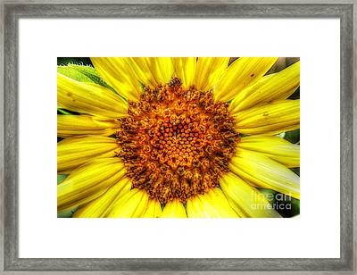 Flower Power Framed Print by Tina  LeCour