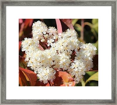 Flower Puffs Framed Print by Kume Bryant