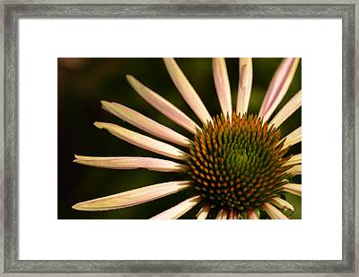 Flower Rays Framed Print