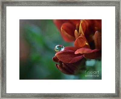 Flower Reflection Framed Print by Michelle Meenawong