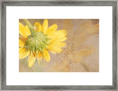Flower Rhythm Framed Print