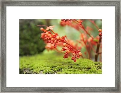 Flower Framed Print by Shuhaib Dew