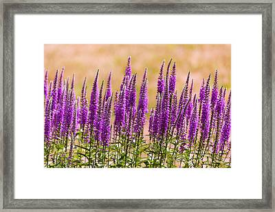 Flower - Speedwell Figwort Family - I Dream Of Lavender  Framed Print by Mike Savad