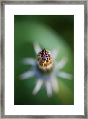Flower Star Framed Print