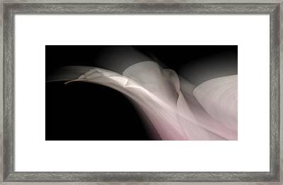Flower Study 17 Framed Print