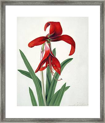 Flower Study Framed Print by Peter Brown