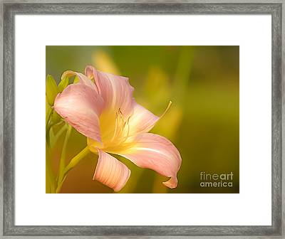 Flower Framed Print by Sylvia  Niklasson