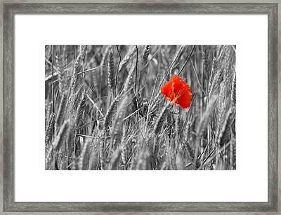 Flower Framed Print by Tommytechno Sweden