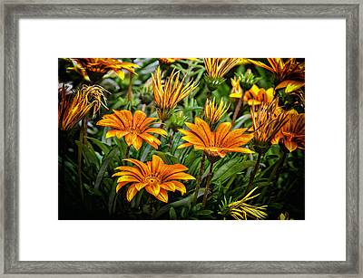 Flower Town Framed Print