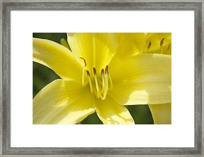 Framed Print featuring the photograph Flower  by Trace Kittrell