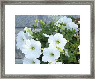 Flower Trios A Framed Print