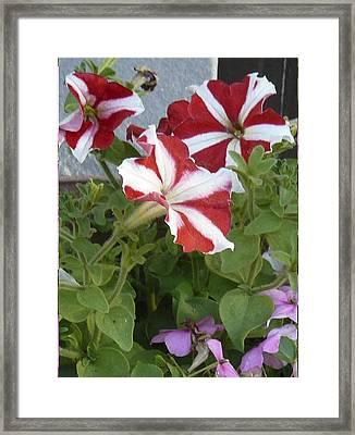 Flower Trios B Framed Print