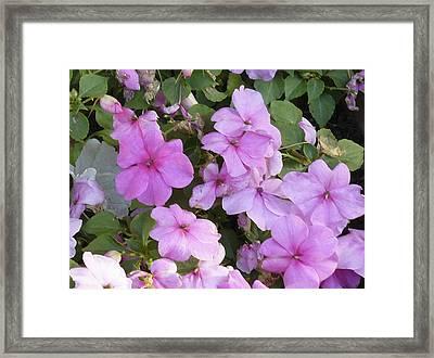 Flower Trios C Framed Print