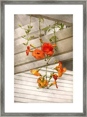 Flower - Trumpet Melodies Framed Print by Mike Savad