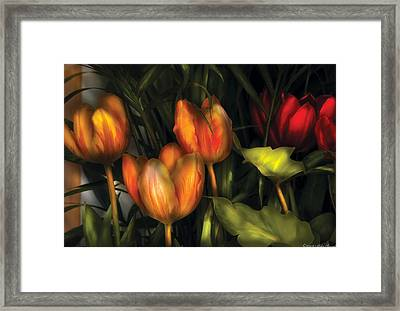 Flower - Tulip -  Orange Irene And Red  Framed Print by Mike Savad