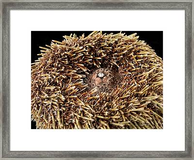 Flower Urchin Framed Print by Natural History Museum, London