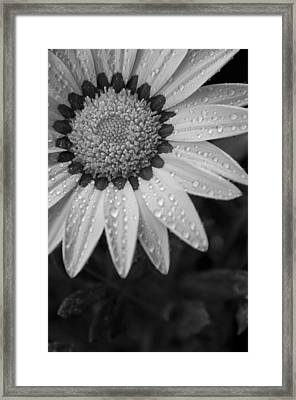 Flower Water Droplets Framed Print