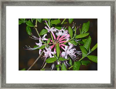 Framed Print featuring the photograph Flower Wheel by Tara Potts