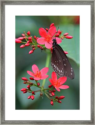 Flower With Butterfly Framed Print by Juergen Roth