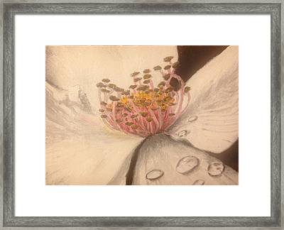 Flower With Dew Drops Framed Print by John Schuller