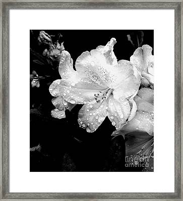 Flower With Water Drops Framed Print