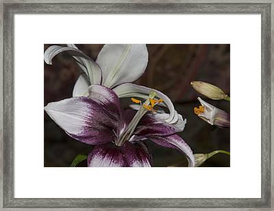 Flower1 Framed Print