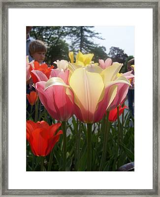 Flower1 Framed Print by Robert Vogt