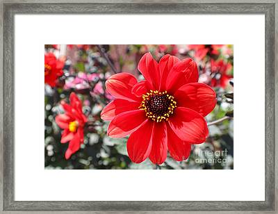 Framed Print featuring the photograph Flower1 by Theresa Ramos-DuVon