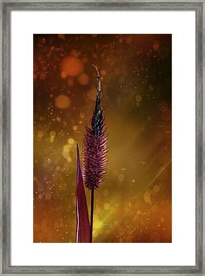 Flowered Blade Of Grass Framed Print by Tommytechno Sweden