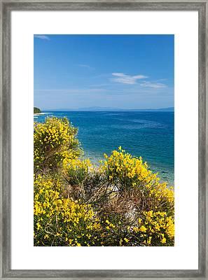 Flowering Broom At Coastal Landscape Framed Print by Panoramic Images
