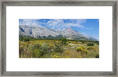 Flowering Broom, Biokovo Mountain Framed Print by Panoramic Images