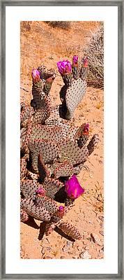 Flowering Cacti Framed Print by Wayne Vedvig