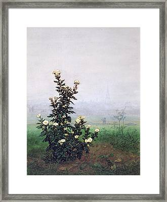 Flowering Chrysanthemum With Worker Framed Print