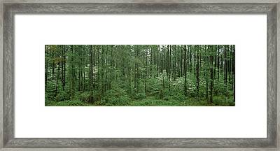 Flowering Dogwood Cornus Florida Trees Framed Print